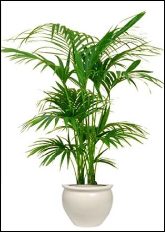 indoor plant hire sydney buy indoor plants sydney office plants